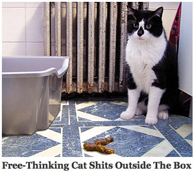 Free_thinking_cat