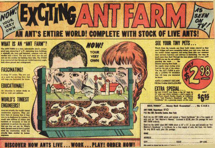Ant_farm
